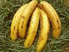 Banana15021204con6